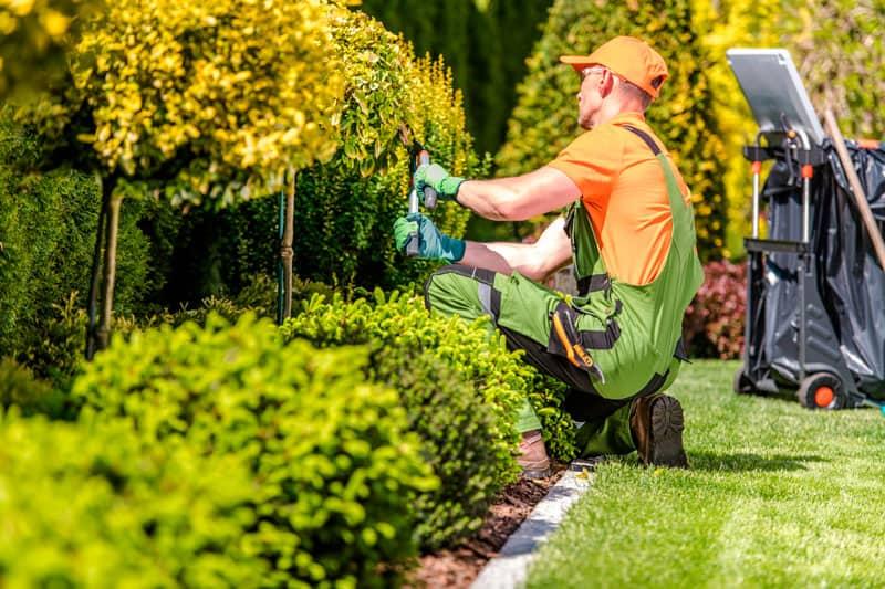 correcto mantenimiento de jardines